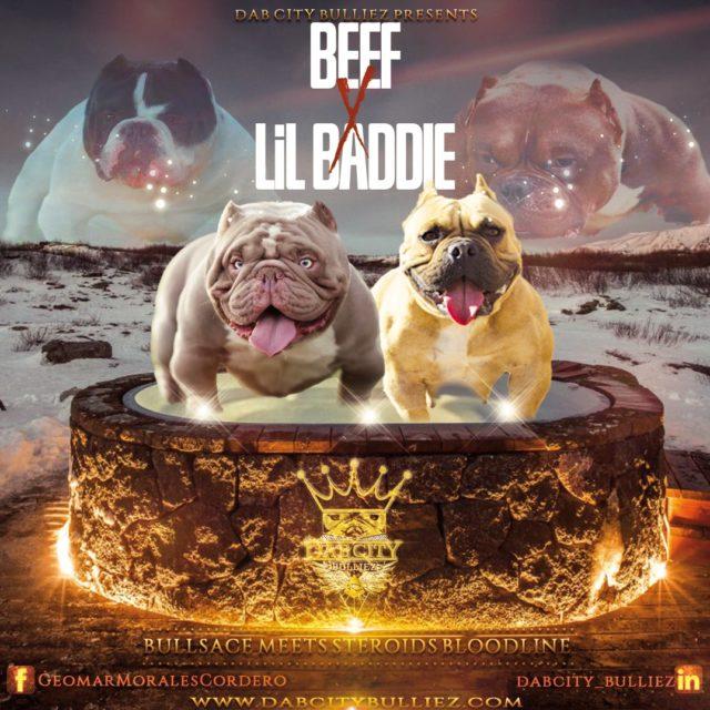 DCB Lil Baddie x DCF Bulls Beef